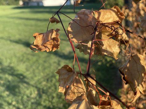 Leaves starting to change around Kenwoods campus.